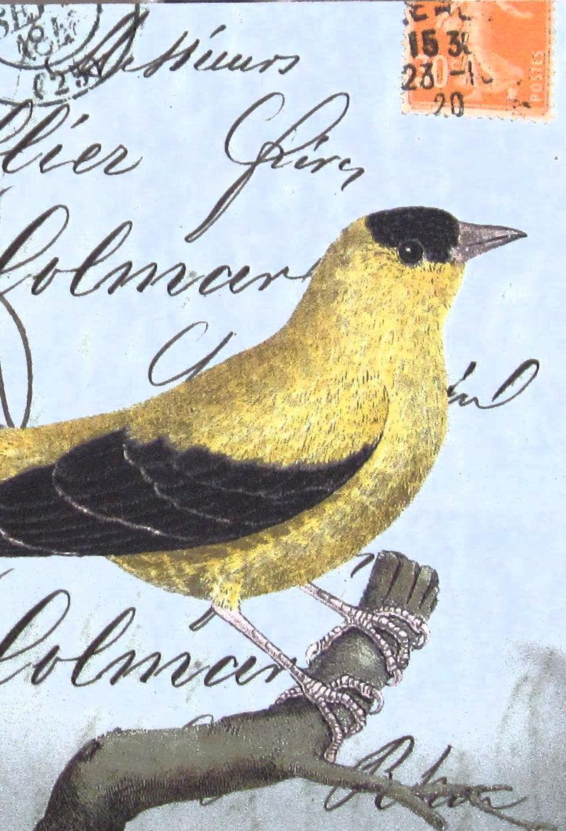 Fugler på hylla 6. Vilmo 2008 244