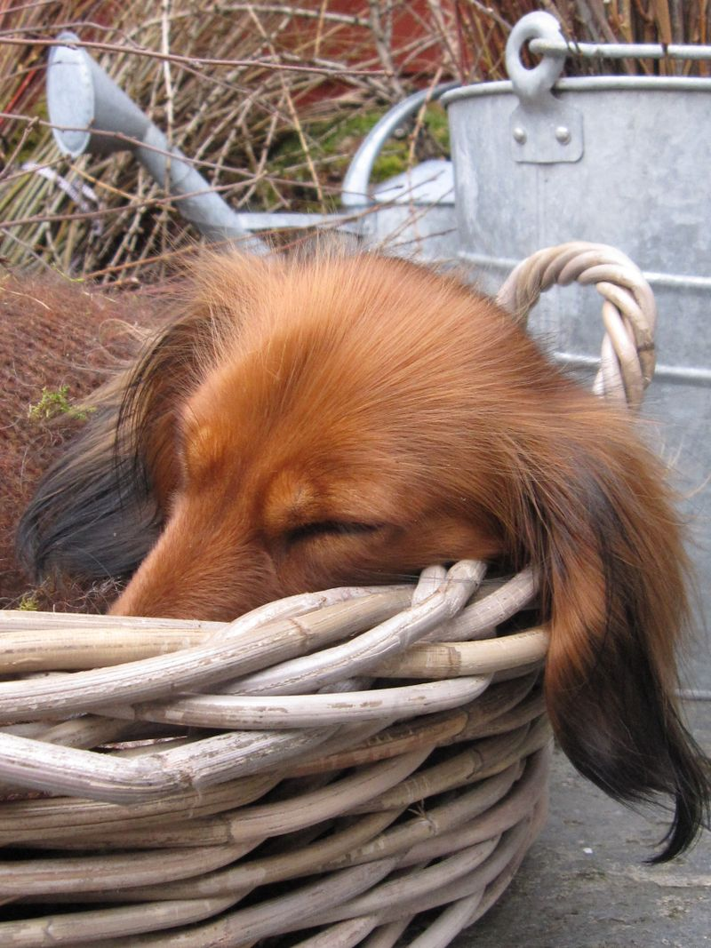 7.mars Vilmo 2009 304