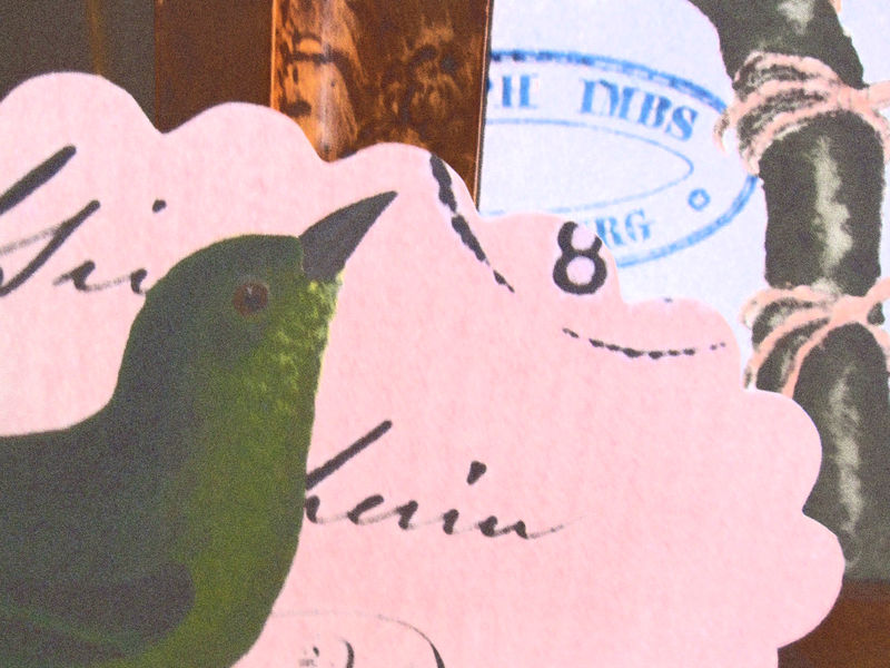 Grønnfugl2 Vilmo 2008 450