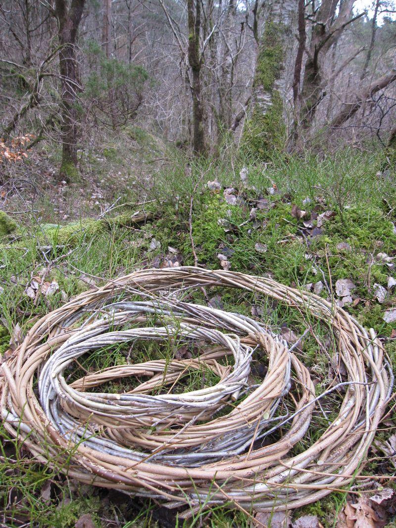 Skogen 20. mars 2009_2009 226 (37)