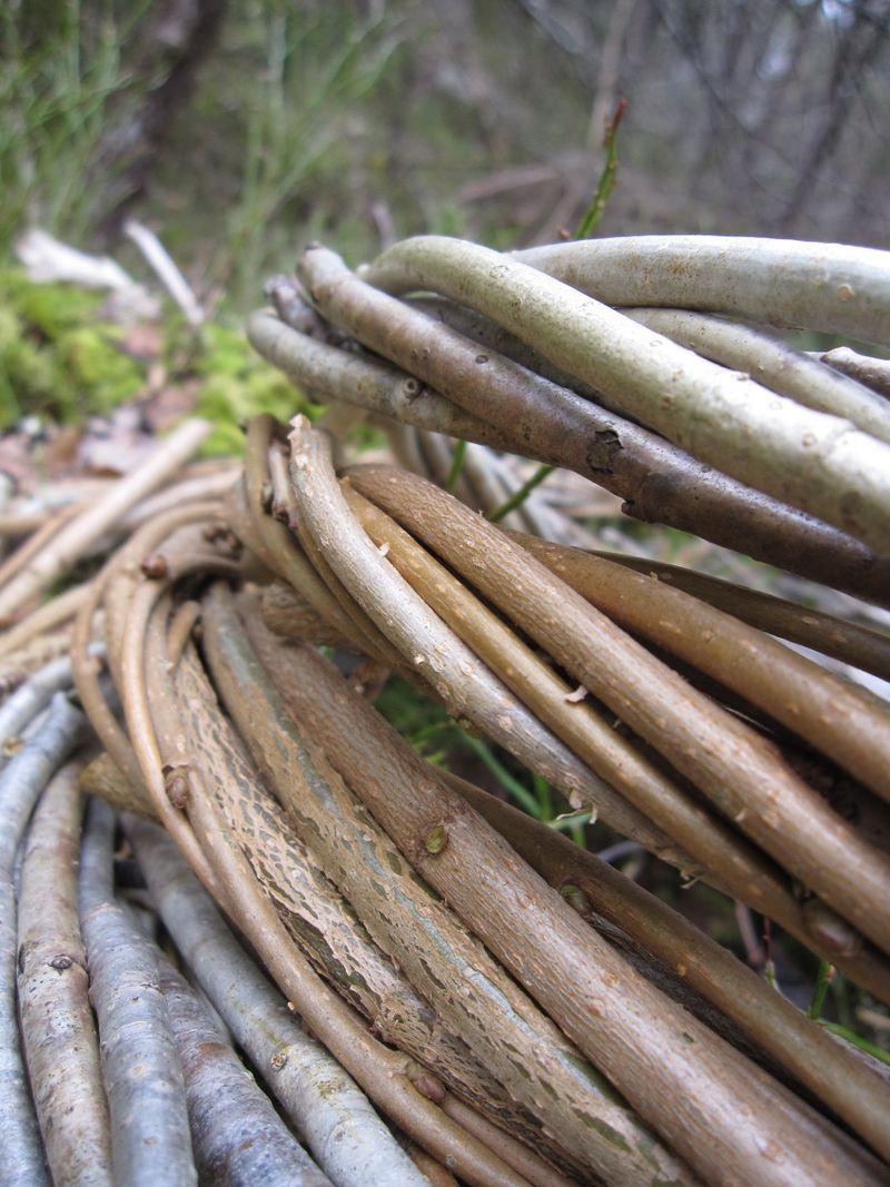 Skogen 20. mars 2009_2009 226 (52)